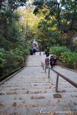 紅葉飄飄15日東京自由行--高尾山:30●必須承認我偷懶。捨棄100多階男坂,選擇從平緩的女坂到藥王院口.JPG