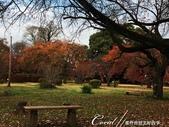 坐在小石川植物園內的樹下賞秋吧:12.JPG