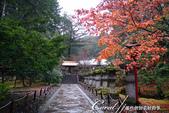 紅葉飄飄15日東京自由行--大猷院:●大猷院內靜悠的一隅.JPG