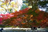 大田黑公園內的美麗楓情畫:DSC06930.JPG