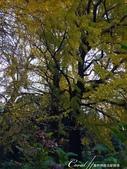 紅葉飄飄15日東京自由行--我在小石川植物園:54●幾抹綠,為秋天增添不一樣的色彩.JPG