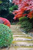 紅葉飄飄15日東京自由行--我在小石川植物園:44●在日本庭園的區塊內,各異奇趣的小徑也特別多,隨意走走,也有不同風光.JPG