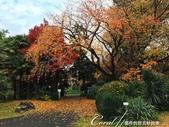 紅葉飄飄15日東京自由行--閃耀著童話森林般迷人色彩的小石川植物園:16●植物園本館是不開放參觀的教學研究室,在經過這棟米黃色的建物後,視野便開始展開02.JPG
