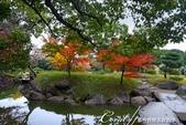 紅葉飄飄15日東京自由行--清澄庭園內的奇石及渡池石塊:05.JPG