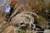 ●一歲一枯榮,向島百花園內的草木只是蓄勢待發,並非死去:DSC08162.JPG