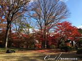 殿ヶ谷戸庭園的深秋楓葉,如火如荼、如烈燄灼燒一般無窮盡的美麗:08.JPG