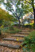 紅葉飄飄15日東京自由行--日比谷公園 :25●充滿自然靈性的公園,難以用言語形容的美麗.JPG