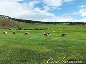 2019夏季內蒙草原風光與西伯利亞貝加爾湖隨心所遇之約(1)--哈爾濱初印象 :02●令人心曠神怡的草原風光,加上牛羊點綴其中,這是一般人對於北方牧民生活的根深柢固想像.jpg