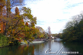 紅葉飄飄15日東京自由行--井之頭恩賜公園:05●從林間小徑,赫然轉折出一副副無與倫比的池畔美景.JPG