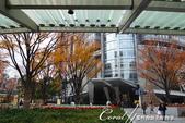 紅葉飄飄15日東京自由行--品味黑毛牛的奢華食光:●六本木站1C出口,來到六本木之丘.JPG
