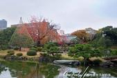 紅葉飄飄15日東京自由行--清澄庭園一眼看不完的池畔風情:07.JPG