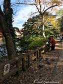 紅葉飄飄15日東京自由行--井之頭恩賜公園:39●這是如同城市綠洲一般存在的美麗公園.JPG