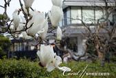 2017關東10日樂得自在:●雖然氣溫低,但繁花盛開,象徵春天真的到來了01.JPG