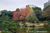 紅葉飄飄15日東京自由行--清澄庭園一眼看不完的池畔風情:05.JPG
