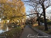 紅葉飄飄15日東京自由行--水光雲影、秋色無邊的水元公園:12●在沿著水域漫走的同時,孩童在對岸遊戲區的歡叫聲,一度打斷聆聽鳥語的意興,這也才驚覺,走了一段不算短的時