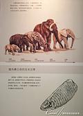 2019夏季內蒙草原風光與貝加爾湖詩意之約(7-2)--扎賚諾爾博物館與傳說中的呼倫湖:06●猛獁公園一知半解走一遭後,可以在這裡找到關於長毛象的答案,包括生長環境、活躍年代.JPG