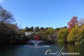 紅葉飄飄15日東京自由行--井之頭恩賜公園:06●從林間小徑,赫然轉折出一副副無與倫比的池畔美景.JPG