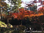 紅葉飄飄15日東京自由行--殿ヶ谷戸庭園:15●繞行弁天池一週,幾許涼意,幾許詩意.JPG