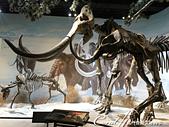 2019夏季內蒙草原風光與貝加爾湖詩意之約(7-2)--扎賚諾爾博物館與傳說中的呼倫湖:07●甚至有骨骼標本的複製品,可以比較真實比例的大小,結束在猛獁公園裡的夢幻想像.JPG