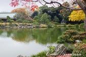 紅葉飄飄15日東京自由行--清澄庭園斑瀾的秋色:09.JPG