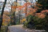 ●成田山公園充滿逸趣的小徑:DSC08401.JPG