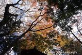 紅葉飄飄15日東京自由行--高尾山:27●仰頭看看頂上的黃綠紅.JPG