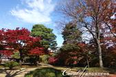 紅葉飄飄15日東京自由行--殿ヶ谷戸庭園:21●高低錯落的崖間,種植了赤松、楓樹與竹,顯現了多重生態下相互輝映的美貌.JPG