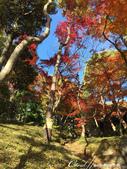 紅葉飄飄15日東京自由行--殿ヶ谷戸庭園:27●高低錯落的崖間,種植了赤松、楓樹與竹,顯現了多重生態下相互輝映的美貌.JPG