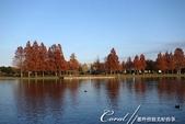 紅葉飄飄15日東京自由行--水光雲影、秋色無邊的水元公園:20●水岸邊的水杉、北美楓香、落羽松...層層疊疊佈成高大壯麗的景象,讓我一圓兒時的拼圖之夢01.JPG