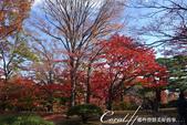 殿ヶ谷戸庭園的深秋楓葉,如火如荼、如烈燄灼燒一般無窮盡的美麗:13.JPG