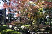紅葉飄飄15日東京自由行--大田黑公園:26●圍繞池邊的散步道,讓人流漣忘返.JPG
