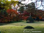 殿ヶ谷戸庭園的深秋楓葉,如火如荼、如烈燄灼燒一般無窮盡的美麗:06.JPG