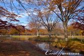 紅葉飄飄15日東京自由行--代代木公園:15●沿著噴水池漫走,每個角度都有超越想像的夢幻美景.JPG