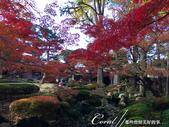 大田黑公園內的美麗楓情畫:IMG_2887.JPG