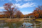 紅葉飄飄15日東京自由行--代代木公園:19●沿著噴水池漫走,每個角度都有超越想像的夢幻美景.JPG
