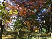 殿ヶ谷戸庭園的深秋楓葉,如火如荼、如烈燄灼燒一般無窮盡的美麗:09.JPG