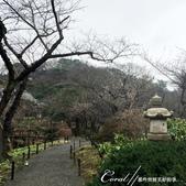 2017關東10日樂得自在:●日式庭園裡少不了的石燈籠及櫻花.JPG