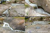 2019自駕隨性之旅(06)--100個死前必去景點之黃石國家公園(泥火山篇):07●形容嘶嘶作響的 Sizzling Basin,雖不見豪氣的噴發,但流過泥水渠一樣有著沸騰的高溫.png