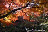 紅葉飄飄15日東京自由行--殿ヶ谷戸庭園:14●繞行弁天池一週,幾許涼意,幾許詩意.JPG