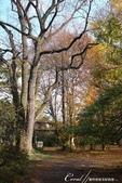 紅葉飄飄15日東京自由行--閃耀著童話森林般迷人色彩的小石川植物園:19●樹的千姿百態.JPG