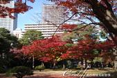 紅葉飄飄15日東京自由行--殿ヶ谷戸庭園:36●前景是楓紅,背景是藍天的好風光.JPG