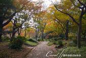 紅葉飄飄15日東京自由行--日比谷公園 :19●充滿自然靈性的公園,難以用言語形容的美麗.JPG