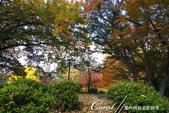 紅葉飄飄15日東京自由行--日比谷公園 :21●充滿自然靈性的公園,難以用言語形容的美麗.JPG