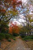 紅葉飄飄15日東京自由行--日比谷公園 :26●充滿自然靈性的公園,難以用言語形容的美麗.JPG