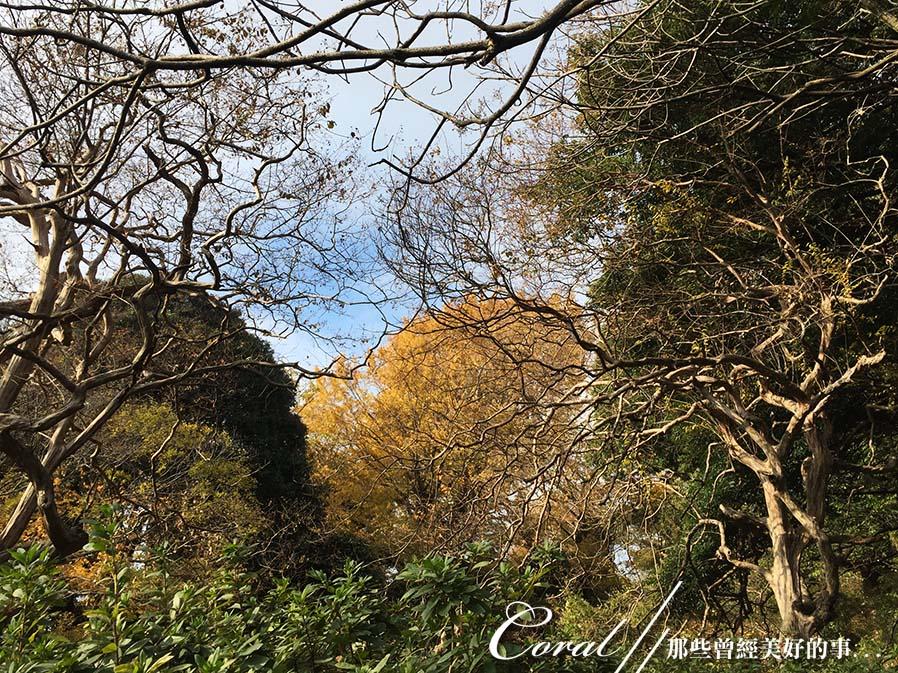 紅葉飄飄15日東京自由行--我在小石川植物園:58●餘光中的來時路,目送我離開植物園.JPG