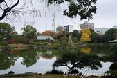 紅葉飄飄15日東京自由行--清澄庭園:22●欣賞池中的魚、水上的鴨和倒映在水中的樹,是來此庭園的一大樂事.JPG