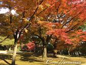殿ヶ谷戸庭園的深秋楓葉,如火如荼、如烈燄灼燒一般無窮盡的美麗:14.JPG
