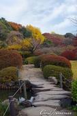 紅葉飄飄15日東京自由行--我在小石川植物園:25●當然,欣賞美麗的風景一定少不了沿著池子漫步一圈.JPG