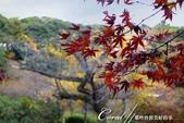 紅葉飄飄15日東京自由行--我在小石川植物園:31●當然,欣賞美麗的風景一定少不了沿著池子漫步一圈.JPG