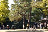 紅葉飄飄15日東京自由行--殿ヶ谷戸庭園:31●不但有美麗的楓,還有蒼勁漂亮的松.JPG